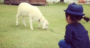 Pattaya Sheep Farm ฟาร์มแกะ